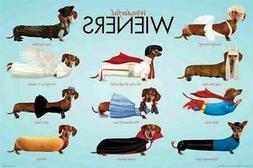 318284 WENER DOGS WONDERFUL COSTUMES ANIMAL Dog Dachshund WA